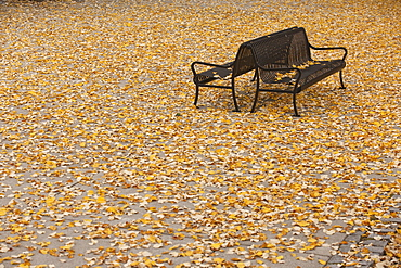 Fallen leaves on benches, North End Park, Boston, Suffolk County, Massachusetts, USA