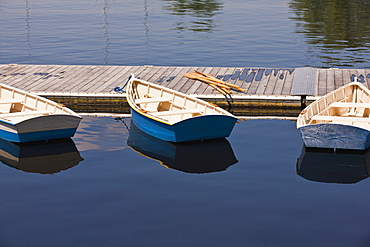 Row boats in the river, Charles River, Boston, Suffolk County, Massachusetts, USA