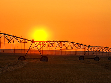 Agriculture - Center pivot irrigation system silhouetted at sunrise on a hay field. The center pivot system is not operating as the hay field has been cut and windrowed for drying prior to baling / Alberta, Canada.