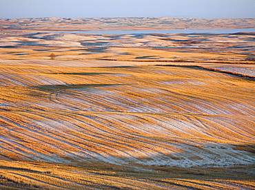 Agriculture - Snow covered rolling field of wheat stubble in early Winter at sunset / Alberta, Canada.