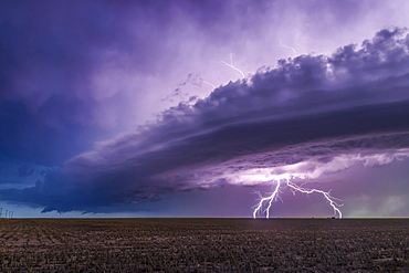 Dramatic storm clouds with forked lightning over farmland; Guymon, Oklahoma, United States of America