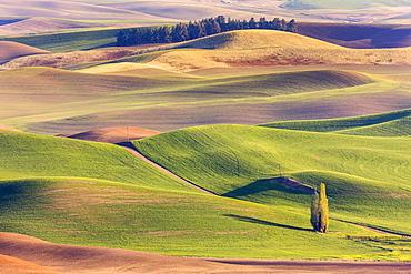 Colourful rolling hills of farmland around the Palouse region in Eastern Washington; Washington, United States of America
