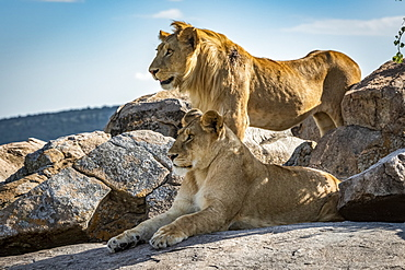 Male lion (Panthera leo) stands behind lioness on rock, Klein's Camp, Serengeti National Park; Tanzania
