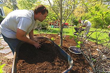 Landscaper mulching a garden using a wheelbarrow
