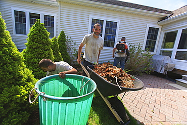 Landscapers clearing weeds into a bin at a home garden and carrying them away in a wheelbarrow