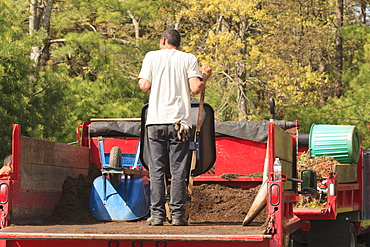 Landscaper getting mulch from the back of a truck in a wheelbarrow