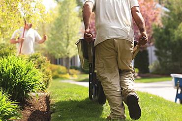 Landscaper carrying mulch to a garden in wheelbarrow