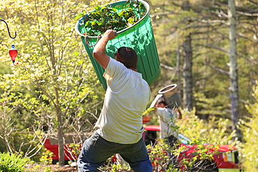 Landscapers carrying bins of weeds