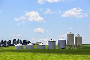 Silos in a row on a green field of farmland under a big blue sky with cloud; Alberta, Canada