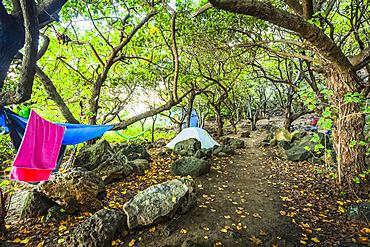 Kalalau Campground in woods by Kalalau Beach, Na Pali Coast State Park; Kauai, Hawaii, United States of America