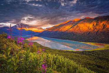 Aerial view of the sunset glow on Chugach Mountains, and reflection on Eklutna Lake. Common Fireweed (Chamaenerion angustifolium) blooming in the foreground. Chugach State Park, South-central Alaska in summertime; Alaska, United States of America