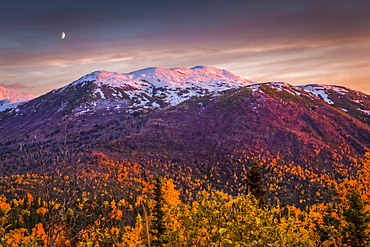 Sunset glow on snow dusted Chugach Mountains with fall coloured foliage, Crescent Moon appears over mountain. Chugach State Park, South-central Alaska in autumn; Anchorage, Alaska, United States of America