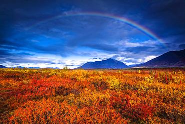 Rainbow over autumn coloured tundra, Alaska Range in the background, Interior Alaska in autumn; Cantwell, Alaska, United States of America