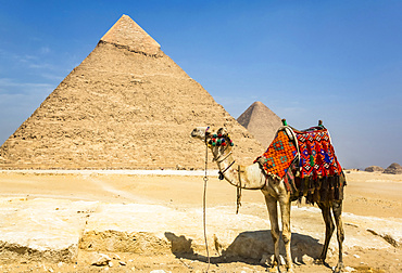 Decorated camel and Pyramid of Khafre (Chephren), Giza Pyramid Complex, UNESCO World Heritage Site; Giza, Egypt