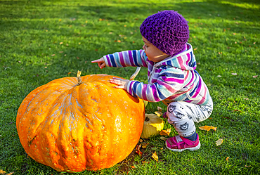 Toddler girl crouches beside large pumpkin on the grass; Whidbey Island, Washington, United States of America