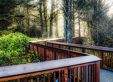 Boardwalk through a forest with the sunrise shining through mist, Cape Disappointment; Washington, United States of America