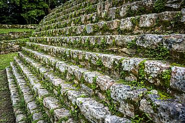 Green foliage growing on the stone steps in the ancient Maya city of Bonampak; Usumacinta Province, Chiapas, Mexico