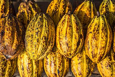 Cocoa pods for sale; Chiapas, Mexico