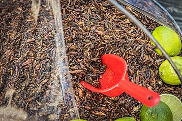 Fried grasshoppers, known as chapulines, for sale; San Cristobal de las Casas, Chiapas, Mexico