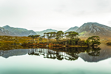 Pine Island on Derryclare lake with the Connemara mountains in the background and with perfect reflections in the water; Connemara, County Galway, Ireland