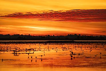 Nong Han Lake and the Red Lotus Sea glowing orange at sunset; Thailand