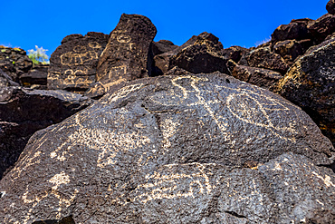 Petroglyphs on volcanic rock in Piedras Marcadas Canyon, Petroglyph National Monument on a sunny, spring afternoon; Albuquerque, New Mexico, United States of America