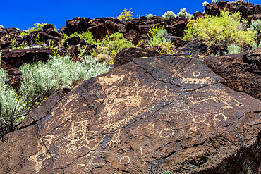 Petroglyphs on volcanic rock with sagebrush in Piedras Marcadas Canyon, Petroglyph National Monument on a sunny, spring afternoon; Albuquerque, New Mexico, United States of America