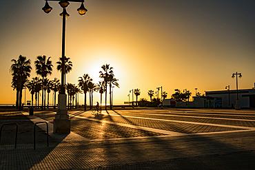 Sunrise silhouette of palm trees in Spain; Valencia, Valencia, Spain