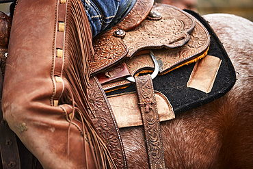 Leatherwork and closer details of a saddle and chaps to the left side; Eastend, Saskatchewan, Canada