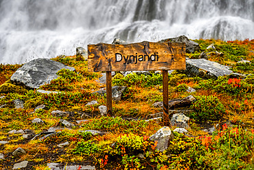 Dynjandi (also known as Fjallfoss) is a series of waterfalls located in the Westfjords, Iceland. The waterfalls have a total height of 100 metres; Isafjardarbaer, Westfjords, Iceland