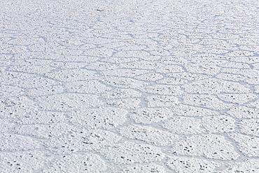 Texture of the floor in the Salar de Uyuni; Potosi, Bolivia