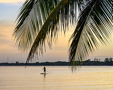 Man on stand up paddle board with palm fronds in the foreground at sunset, Placencia Peninsula; Belize