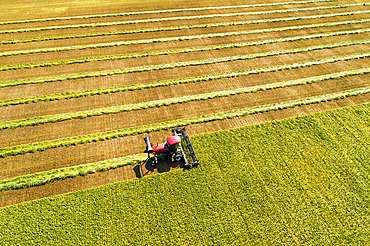 Aerial view of a swather cutting a barley field with graphic harvest lines; Beiseker, Alberta, Canada