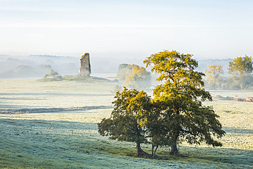 Two trees and an old castle ruin in fog and frost on a winter morning; Clonlara, County Clare, Ireland
