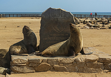 Fur seals at Cape Cross Seal Colony, Skeleton Coast; Namibia