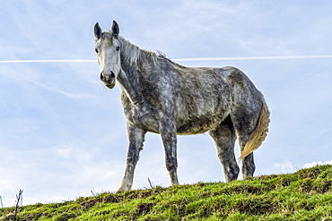 Horse standing on a grassy hillside looking at the camera; South Shields, Tyne and Wear, England