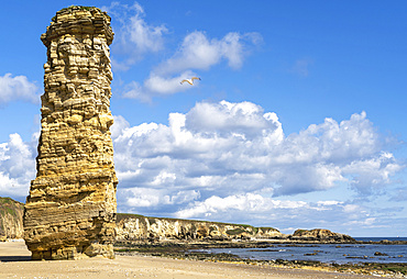 Lot's Wife Sea Stack, Marsden Bay; Tyne and Wear, England