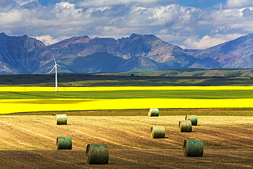 Hay bales in a cut field lit by the sun with fields of flowering canola, a windmill, rolling hills and mountain range in the background, North of Waterton; Alberta, Canada