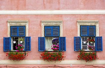 Flowers decorate residential windows with blue shutters on a building with pink facade; Sibiu, Transylvania Region, Romania