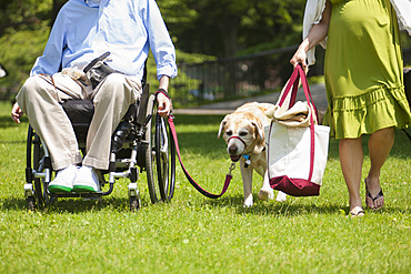 Man in wheelchair with spinal cord injury walking with service dog and pregnant wife