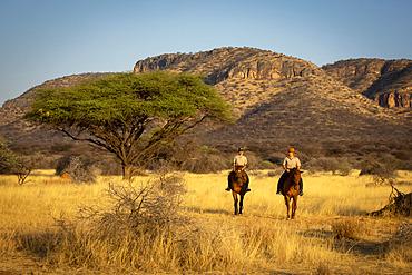 Two women riding horses (Equus ferus caballus) traveling past acacia tree through the bush at the Gabus Game Ranch with mountains in the background at sunset; Otavi, Otjozondjupa, Namibia