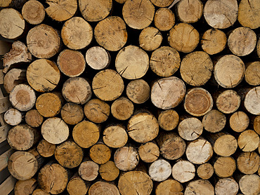 Rounds of cut wood in a pile; Whitehorse, Yukon, Canada