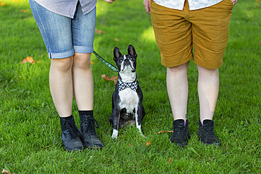Owners standing in a park with their dog wearing a bowtie; North Vancouver, British Columbia, Canada