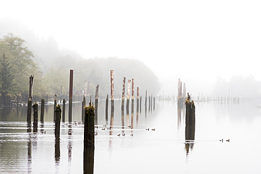 Fog creates a peaceful atmosphere on the Netul River at Lewis and Clark National Historical Park in Oregon; Astoria, Oregon, United States of America