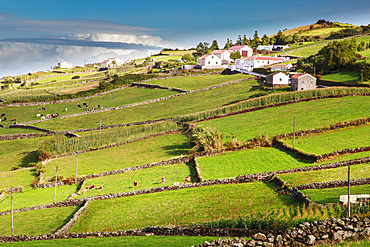 Aerial view of farm buildings and grassy farmland separated by stone walls along the coastal mountainside; Terceira, Azores