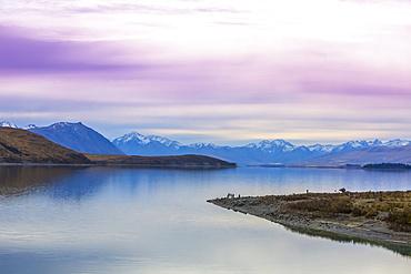 Beautiful views over the shoreline of New Zealand's Lake Tekapo at sunset; Canterbury, New Zealand