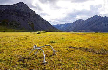 A caribou rack lit up by the sun, marks the end of a remote bush airstrip in the Upper Marsh Fork Valley, Brooks Range, Arctic National Wildlife Refuge; Alaska, United States of America