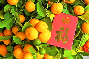 Chinese New Year kumquat trees with Lai See Red Envelopes, Hong Kong, China, Asia