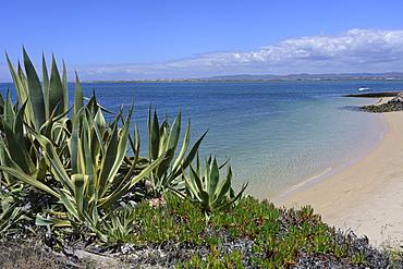 Farol village beach, Culatra Island, Olhao, Algarve, Portugal, Europe