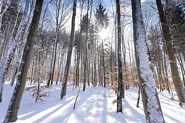Forest in winter, Swabian Alb, Baden Wurttemberg, Germany, Europe